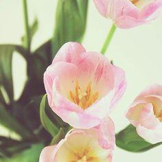 Tulips | @designconundrum