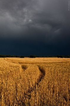 thunderstorms and corn fields