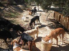 Θεόκλητος Προεστάκης: O Κρητικός οδοντίατρος που φροντίζει 200 αδέσποτα σκυλιά, τα οποία βρίσκει σχεδόν ετοιμοθάνατα! (photo Kangaroo, Photo And Video, Dogs, Animals, Image, Beauty, Baby Bjorn, Animales, Animaux
