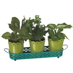 """15"""" Fancy Fair Modern Style Lime Green and Turquoise Decorative Flower Pot Planter Set From the Fancy Fair Collection  Show off your plants in a fun way, with this brightly colored, modern-style garden planter that features cutouts  Each set contains (4) pieces, (3) flower pots and (1) tray for display  Pots feature scalloped edges"""