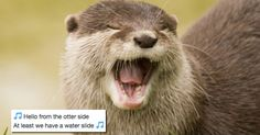 We Already Thought Otters Were the Cutest, but Then We Found Out They Love to Do This