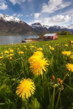 Luster Spring PalettebyStian on 500px○ 600✱900px-rating:99.4☀Photographer:Stian , Norway