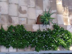 Aerial View of Window Boses that border the Front Staircase. Best Web, Aerial View, Window, Exterior, Plants, Design, Windows, Plant