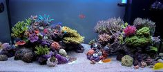 See more in the All Things Aquaria board: https://www.pinterest.com/JibinAbraham/all-things-aquaria/  Sweet SPS Reef