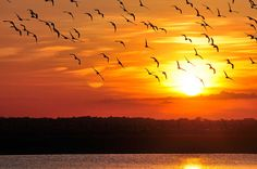 Colombia Llanos Orientales - Exotic Places, Beautiful Sunset, Sunrise, Paradise, Country, Couples, World, Awesome, Beach