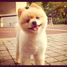 this may be one of the cutest dogs ever