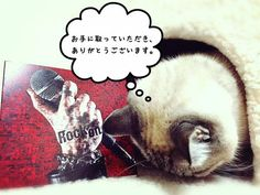 看板猫。#nano_rockon