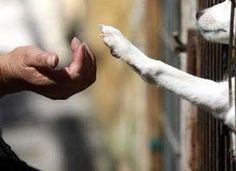 No dia 4 de Outubro, comemora-se o Dia Mundial dos Animais. Este dia foi escolhido por coincidir com a data em que se assinala a morte (em 1226) de São Francisco de Assis, considerado o padroeiro dos animais.