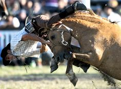 """It's """"Criolla"""" (Creole) Week in the Uruguayan capital of Montevideo - and as part of their celebrations the locals held a rodeo event which attracts the best riders from across Uruguay and its neighboring countries Brazil and Argentina as they compete against each other in the most extreme ride-off in South America."""