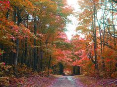 road8 by winteridge2, via Flickr