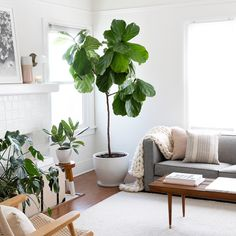 Beautiful Natural Living Room Decorating Ideas With Plants Living Room Plants, Room With Plants, Living Room Decor, Living Spaces, Interior Design Inspiration, Home Decor Inspiration, Minimal Home, Home And Living, Decoration