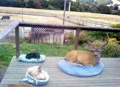 Un cervo che si riposa in cortile
