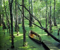 Reelfoot Lake, Tennessee: Noted for its Cypress Trees and Bald Eagles Places Around The World, Oh The Places You'll Go, Places To Travel, Places To Visit, Tennessee Usa, Nashville Tennessee, Tennessee Hiking, Blue Ridge Mountains, Adventure Is Out There