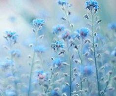 #blue #wildflowers #nature #pretty