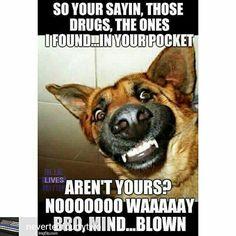 Credit to @nevertenfourtytwo : #backtheblue #thinblueline #thinbluelife #backthebadge #bluelivesmatter #humanizingthebadge #nevertenfourtytwo #nevertenseven #wevegotyoursix #wevegotyour6 #police #LEO #popo #cop #haha #lol #humor #funny #drugs #joke #mindblown LPMISSY