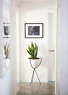 Une plante pour relooker et décorer le couloir