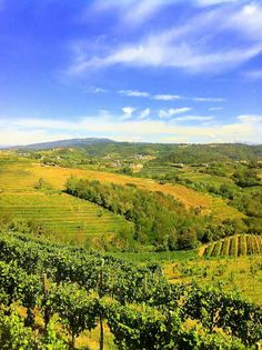 #Collio #Trieste #Vineyards, Trieste , province of Trieste  FRIULI Venezia GIULIA region of Italy