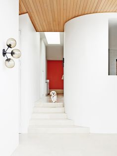 White entryway with red door, wood ceiling, and small dog