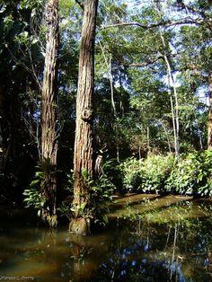 TrekkBrasil: Parque Nacional da Tijuca