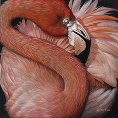 Pink Flamingo - Painting Art by Edward Spera