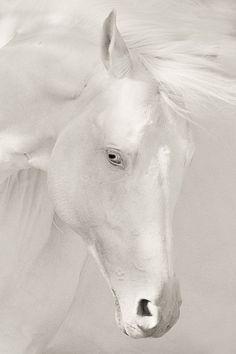 .White magic Mais