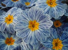 Another rare flower is the Zebra Blue Primrose. This is a unique plant due to its exquisite pattern. It grows a blue and white striped flower with a golden ...
