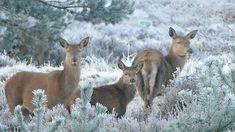 Deer Family · Free Stock Video