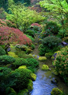 low plants in japanese garden