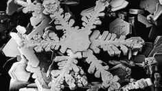 incredible close-up photo of real Snowflakes, magnified 2000x - just beautiful
