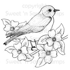 Bluebird Digital Stamp - Sweet 'n Sassy Stamps, LLC Bird Drawings, Pencil Art Drawings, Art Drawings Sketches, Animal Drawings, Easy Drawings, Drawing Birds, Drawing Flowers, Bird Embroidery, Hand Embroidery Patterns