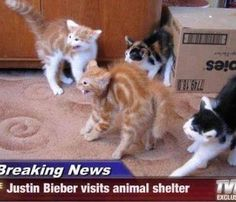 Justin Bieber visiting an animal shelter.  Though it's funny, no offense to Bieber fans.  Young kittens do this all the time. (@#$&)