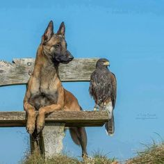 Dog: you smell that? Bird: no, but I see it