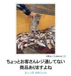 【元祖】ネコだけをまとめた「ボケて」傑作選【ハイレベル】 - NAVER まとめ