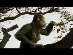 3 400 000 AC Australopitecus: Historia de Lucy - YouTube
