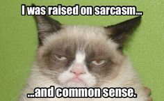 Funny pictures about Grumpy Cat on Mondays. Oh, and cool pics about Grumpy Cat on Mondays. Also, Grumpy Cat on Mondays. Grumpy Cat Quotes, Funny Grumpy Cat Memes, Funny Cats, Funny Animals, Funny Memes, Funniest Animals, Funny Horses, Hilarious Jokes, Funny Minion