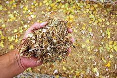 DIY Leaf Mold to Improve Your Garden's Soil