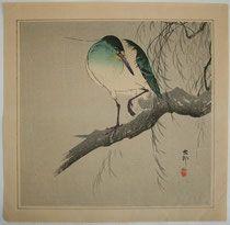 柳の枝に五位鷺 Night-heron with raised leg on willow branch