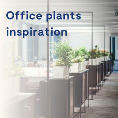 Let Patch help find the best office plants for you. We deliver to your office in London and nationwide with simple care advice. Buy Plants, Indoor Plants, Best Office Plants, Plants Delivered, Improve Productivity, Office Environment, Plants Online, Pinterest Board, Life