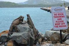 Illiterate lizards.....