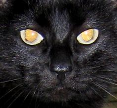 Cullen family black cat