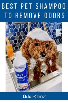 Self-quarantined? It might be time to give your pet a bath! Best natural shampoo for pets, no chemicals and removes all odors! Pet Odor Eliminator, Dog Smells, Pet Shampoo, Body Odor, Odor Remover, Pet Odors, Natural Shampoo, Pet Care, Allergies