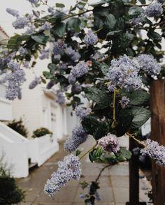 """He'd closed the door to all of his emotions years ago, but now, the aroma that seeped from her flawless skin was an intoxicating mixture of lilacs and rain, captivating his senses."" - Beth Bares  (Rainy Day in the bay at Noe Valley, San Francisco)"