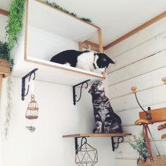 猫の幸せそうな顔がみたい賃貸でもOKなキャットウォークDIYリノベアイデア集