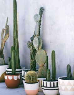 hottest trends for the year 2019 No. 7 - cactus arrangements - Home Decor The hottest trends for the year 2019 No. 7 - cactus arrangements - Home Decor -The hottest trends for the year 2019 No. 7 - cactus arrangements - Home Decor - Decoration Cactus, Decoration Plante, Cacti And Succulents, Potted Plants, Indoor Plants, Plant Pots, Cacti Garden, Indoor Gardening, Indoor Succulent Garden