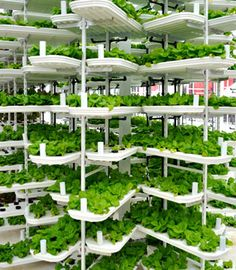On the top level of a downtown Vancouver parking garage, North America's first commercial vertical farm has set up shop. 'Local Garde...