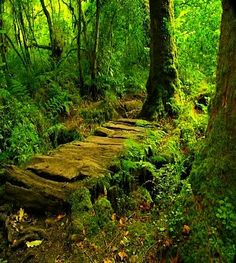 Forests<3 would love to write there up against a tree:) #trees. #forests. #inspire