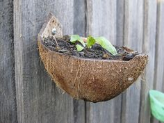 coconut shells - nice container gardening