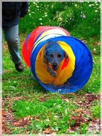 www.dogwalktrailaustria.com vakantie met hond