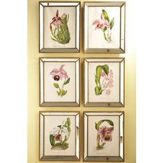 Orchidees Orchid Wall Art - Set Of 6 - Set Of 6, Clear by Home Decorators Collection $439