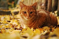 #cute #cat #Kittens Who Love Fall